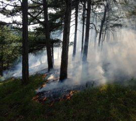 Waldbrand in Steinhof